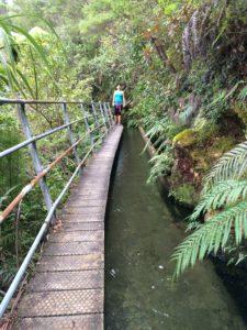 Trek Training NZ